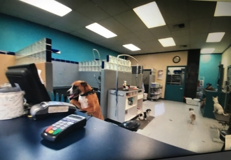 Pet Grooming Salon on Busy Highway in Snohomish County